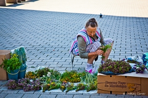 A Babushka selling flowers in Lithuania (she spoke Russian).