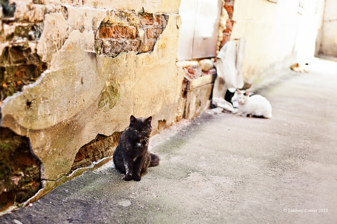 the alley cats.