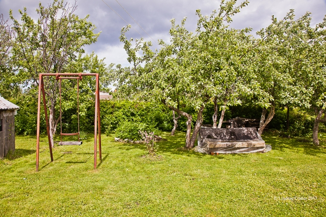 the fruit trees on our property.