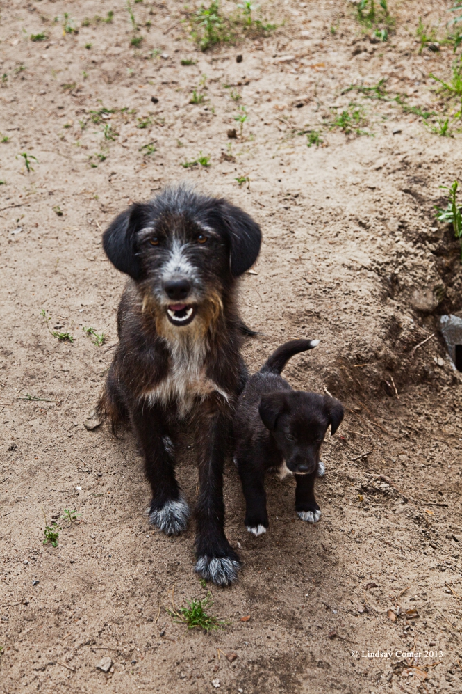 a stray dog with her puppy who lived at the camp grounds - they were both so adorable, I wanted to take them home with me.